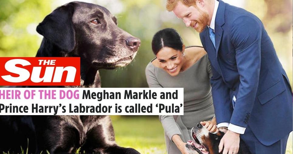 Ca să pună capăt miştourilor, Meghan Markle şi prințul Harry au mai dat câinelui unnume: Sug!
