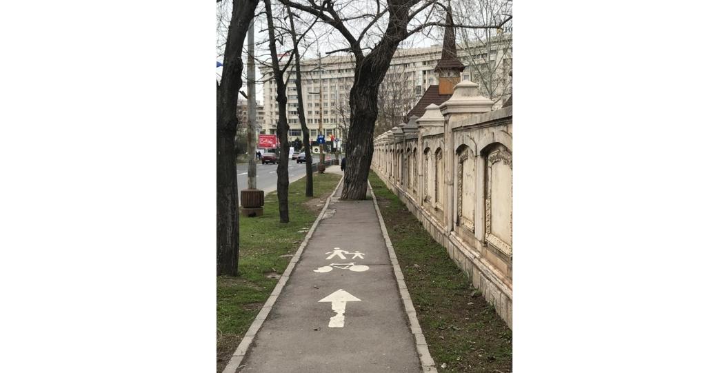 Când s-a făcut pista pentru biciclete, copacul nu era acolo. A crescut ulterior