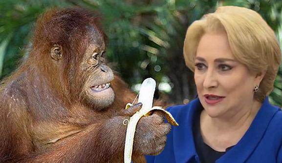 S-a întâmplat:Viorica a fost la Zoo și toate maimuțele i-au dat banane,de milă!