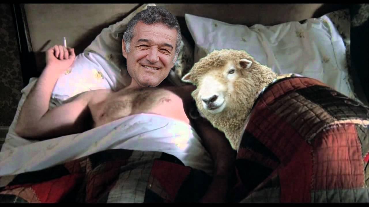 """A apărut ciobanul pacifist care își crește oile după îndemnul flower-power """"Make love, not war!"""""""