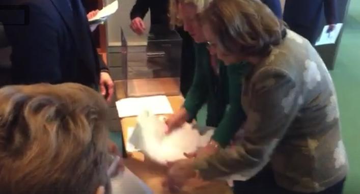 Maria Grapini a încercat să fure voturi, demonstrându-le astfel europenilor că au dreptate să ne considere hoți